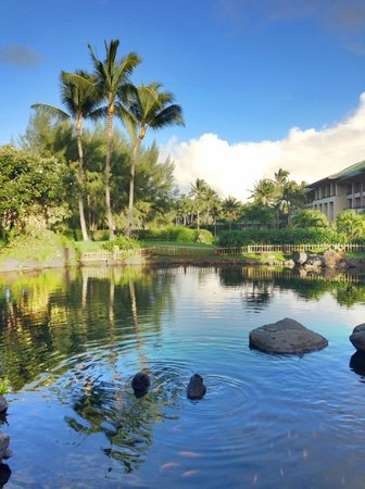 Grand Hyatt Kauai Resort & Spa : Black swans at hotel entrance