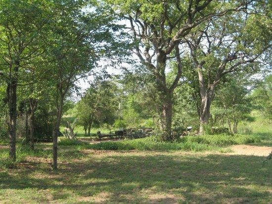 Shindzela Tented Safari Camp: Området ved hyttene