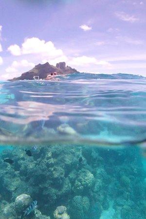 The St. Regis Bora Bora Resort: snorkling