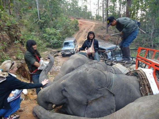 Elephant Special Tours: Treck Beginn