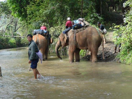 Elephant Special Tours: Flüsse waren kein Hindernis