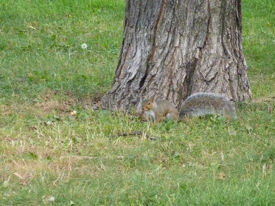 Toronto Island Park: Eichhörnchen