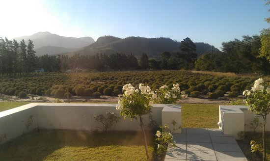 Lavender Farm Guest House Franschhoek: View from patio