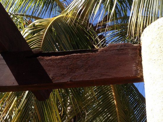 Sugar Beach Hotel: Termite beams on room porch
