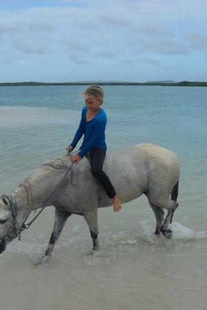 Horse Ranch Bonaire: More wow