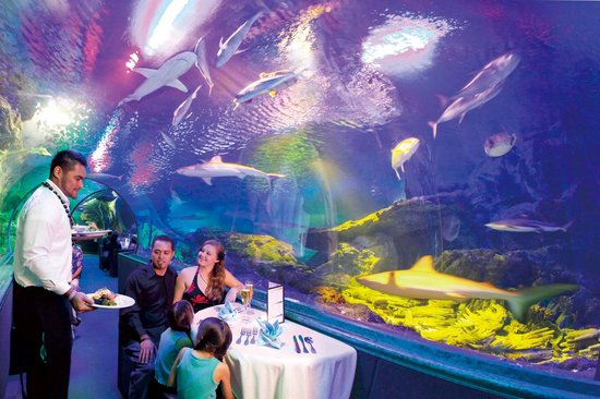 Dinner Under The Sea