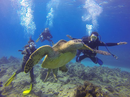 Oahu Diving: Swimming with turtles!
