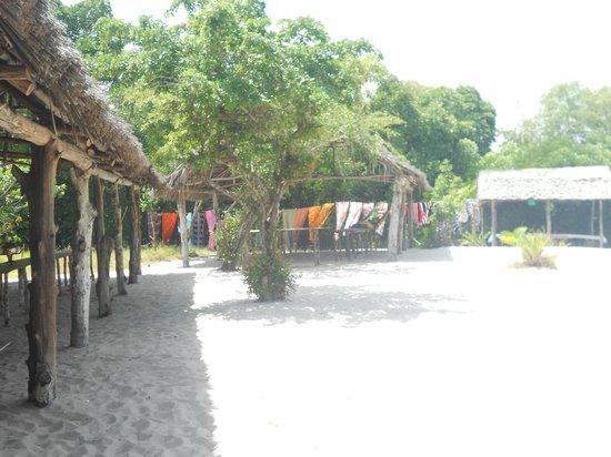 Mida Creek: Mangrovie