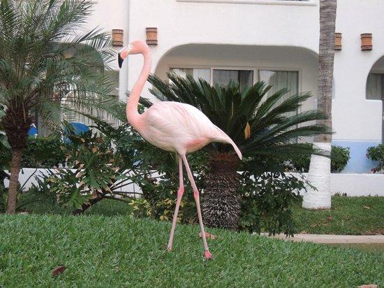 Pueblo Bonito Los Cabos: Beautiful flamingo.