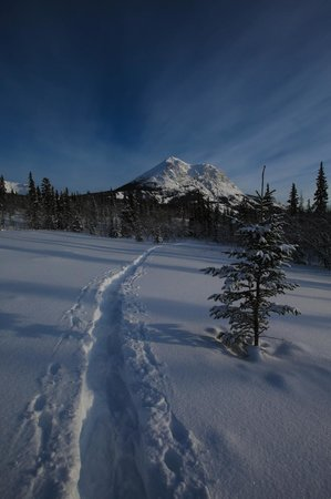 Tagish Wilderness Lodge : View while snowshoeing