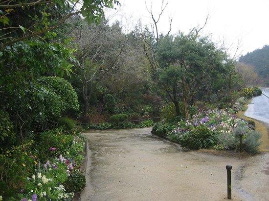 Chichu Art Museum : モネの庭??