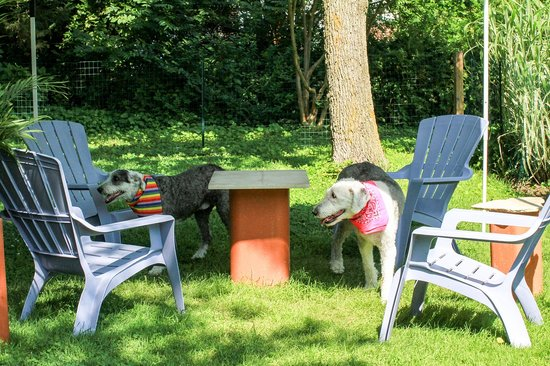 The Homestead at Rehoboth Bed & Breakfast : Large off-leash Pet Walk