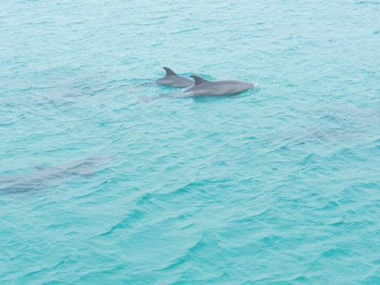 Olin Marler Fishing and Dolphin Cruises: Dolphins
