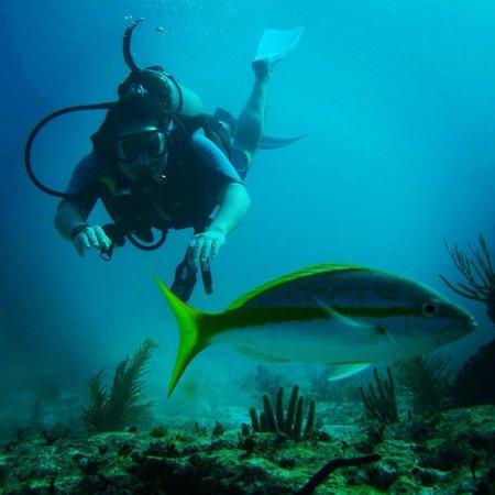 Luum ha Divers: Azul Profundo