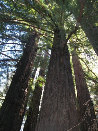 Big Sur Lodge: on the territory