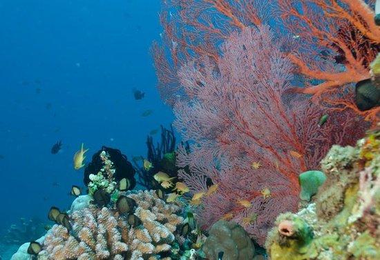 Amed Dive Center: Tulamben Wall Dive Site in Tulamben area