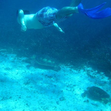 Réserve marine de Hol Chan : Our teenager swimming with the turtles