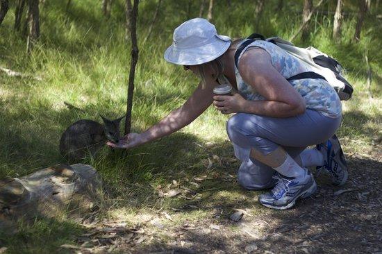 Moonlit Sanctuary Wildlife Conservation Park: Feeding the wallabies
