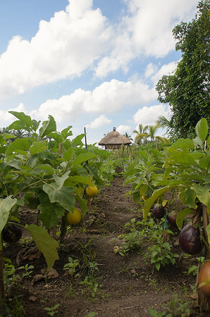 Bhuwana Ubud Hotel: organic egg plant