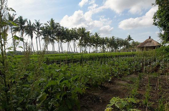 Bhuwana Ubud Hotel: organic garden
