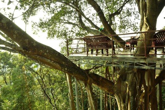 Chamundi Hill Palace Ayurvedic Resort: relax zone beneath old banyan tree