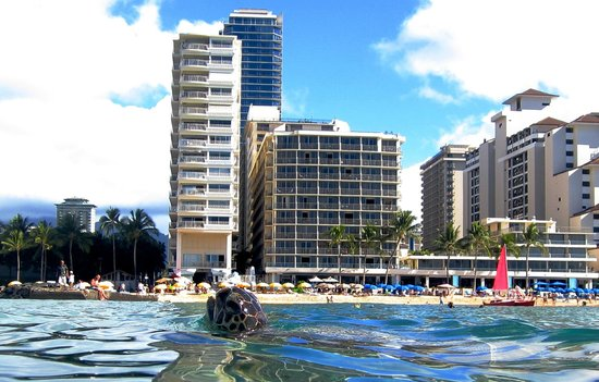Outrigger Reef Waikiki Beach Resort: Even the Turtles have an eye on this hotel (J Roberts 2013)
