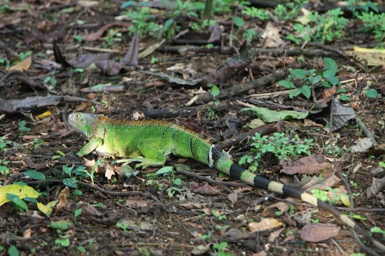 Go Tours Costa Rica - Day Tours: Flying Iguana