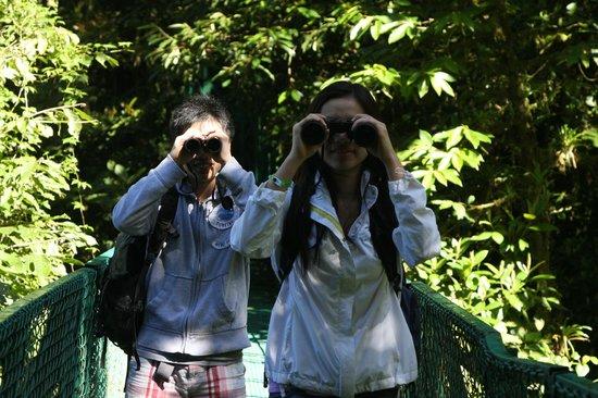 Go Tours Costa Rica - Day Tours : Hanging Bridge..