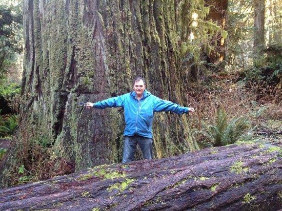 Redwood Highway: Örjan och trädet