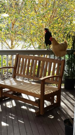 Whidbey Island Bed & Breakfast: Phyllis + co enjoying some morning sun.