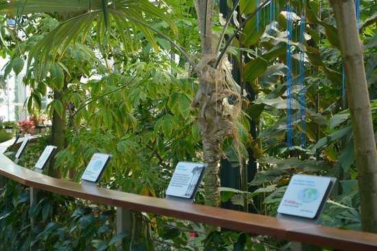 The Huntington Library, Art Collections and Botanical Gardens: Inside the glasshouse