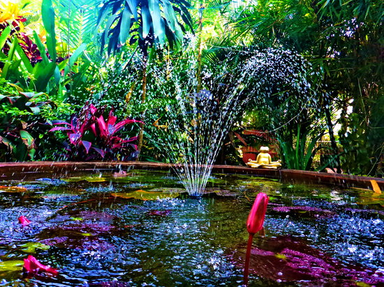 Casa Tres Amigos: The pond