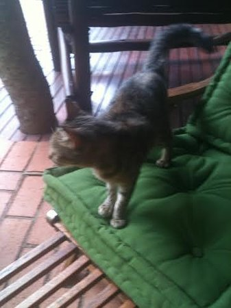 Mhlati Guest Cottages: Our house-cat.