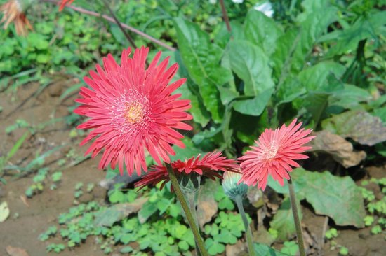 Peerless Resort, Mukutmonipur: Flora & Fauna @ The Peerless Resort, Mukutmanipur