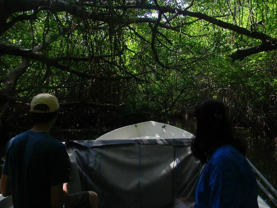 VTS Lanka Tours: Through the deep mangrove forests
