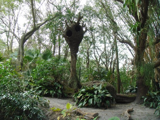 Disney's Animal Kingdom: Discovery lands