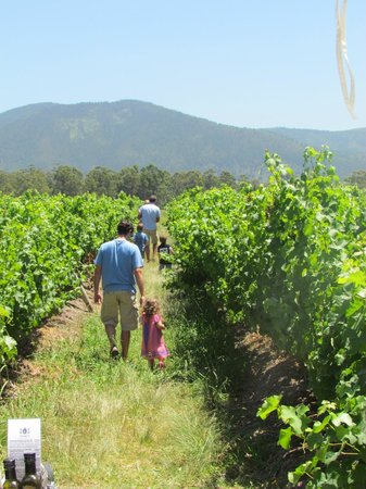 Bramon Wine Estate: Beautiful walk around the Vineyard