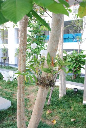 Nap Patong : Giardino tropicale