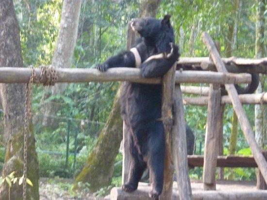 Kuang Si Falls: Black Bear Just Hanging Out