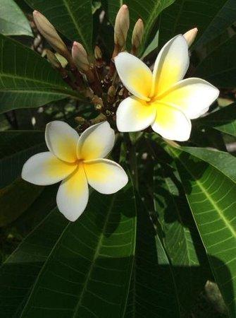 Tamassa: Exotic flowers