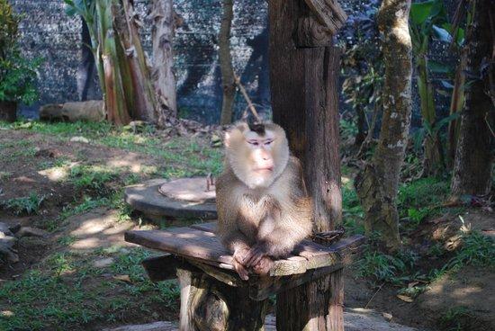 Chiang Mai Monkey Centre : condizioni delle scimmie