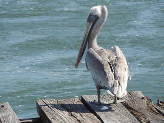 Espacio Natura: Pelikan