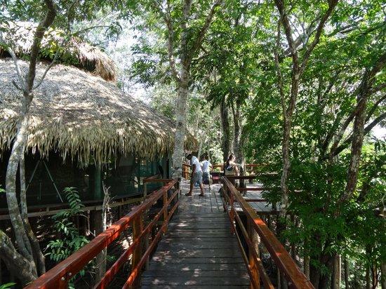 Juma Amazon Lodge: Стандартные номера