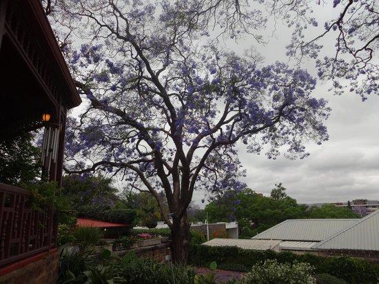 Melvin Residence Guest House: Jacaranda