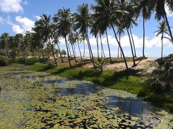 Sauipe Resorts : Coquiros a perder de vista