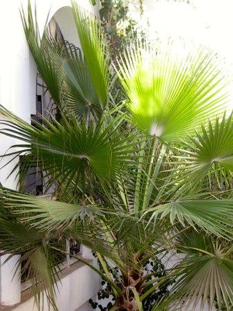 Riad Anyssates: Hotel plants