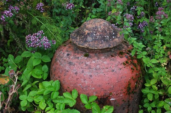 The Lost Gardens of Heligan: Lost Gardens of Heligan