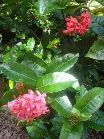 Coco Bay Villa: Coco Bay garden