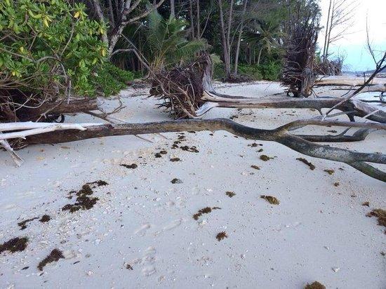 New Emerald Cove: Spiaggia