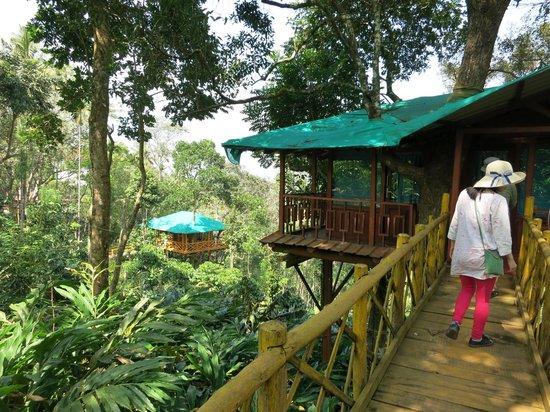 Tree Hut Picture Of Dream Catcher Plantation Resort